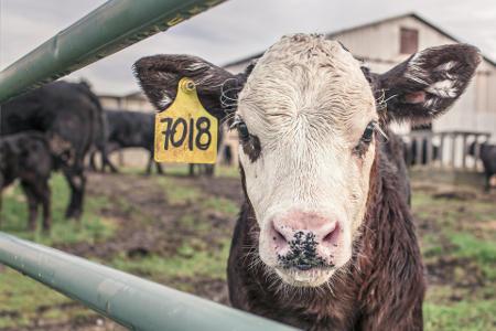 Production laitière - Ferme CS innovation